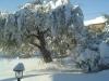 neve-12-02-2012